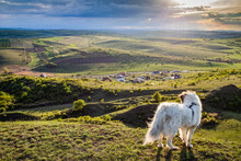 White Dog Overlooking A Small Romanian Village In The Countryside In Summer, Romania, Europe