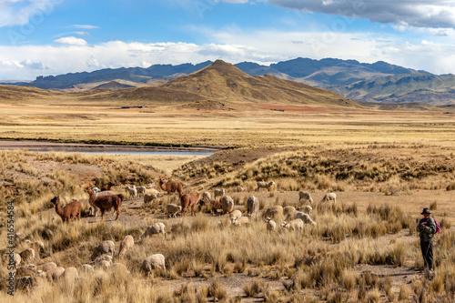 Fotografija The Altiplano - Peru - South America