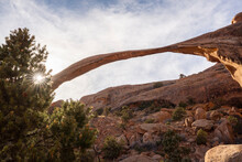 Landscape Arch With Sunburst Through Tree, Arches National Park, Utah, United States Of America, North America