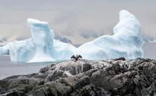 Antarctic Shag Spreading Wings With Wing-shaped Iceberg, Antarctica, Polar Regions