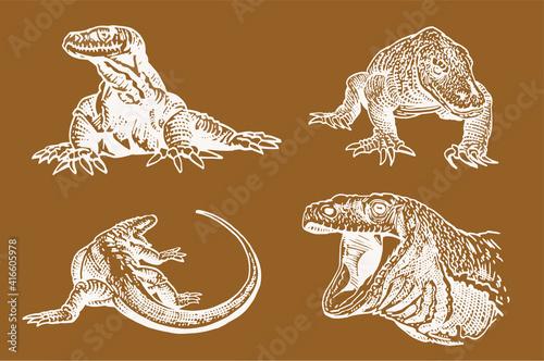 Obraz na plátně Vector color illustration of varans,lizards