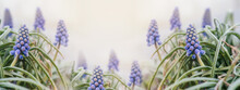 Blue Muscari Flowers Floral Spring Banner