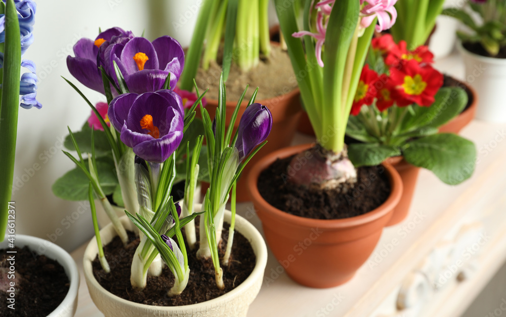 Fototapeta Different beautiful potted flowers on table near white wall