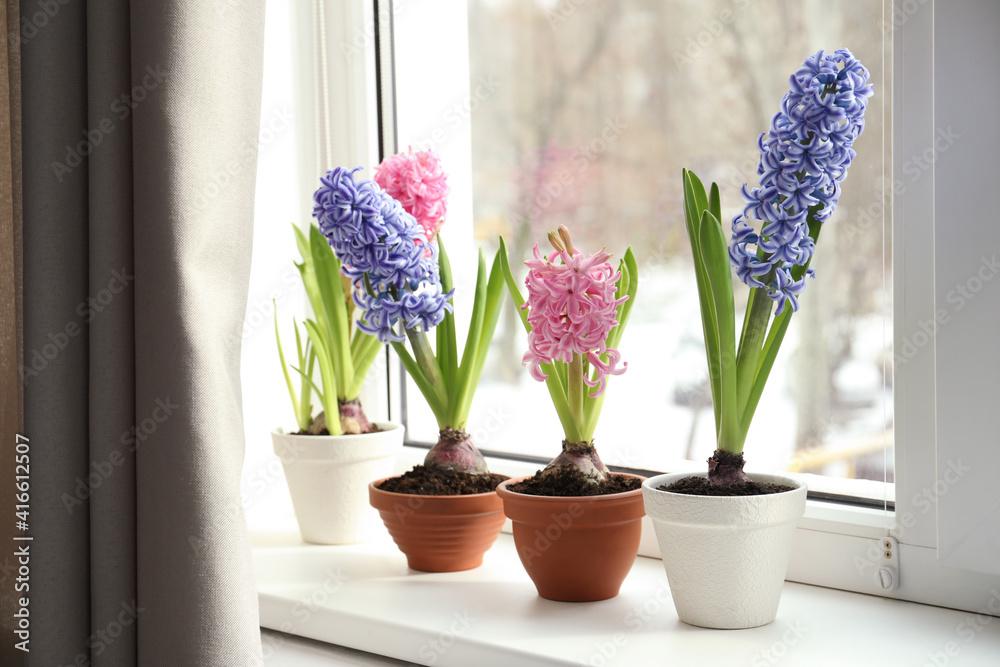 Fototapeta Beautiful hyacinth flowers in pots on window sill indoors