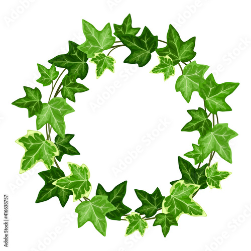 Valokuvatapetti Vector wreath with green ivy (hedera helix) leaves.