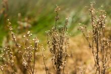 Acercamiento De Plantas En Verano