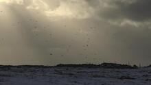 Bird Flock Flying In Storm Cloud God Beams Iceland Winter Farm Fence