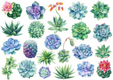 Set Of Succulents And Cactus, Watercolor Illustration, Botanical Painting
