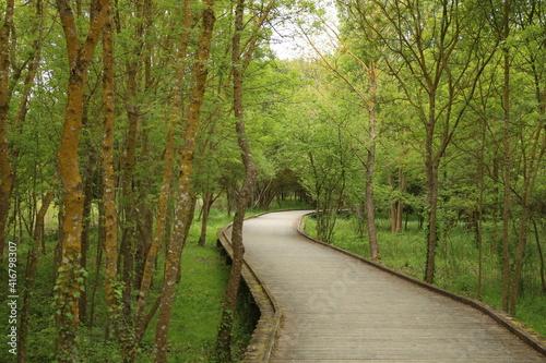 Fototapeta Pont Marais
