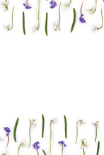 Beautiful White Snowdrops Galanthus Nivalis And Blue Scilla Bifolia ( Alpine Squill, Two-leaf Squill ) On A White Background Wiht Space For Text. Top View, Flat Lay