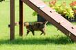 Kotek w ogrodzie na zielonej trawie