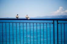 Bird On The Pier