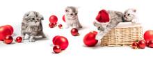 Christmas Kittens In Basket