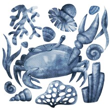 Watercolor Monochrome Crab With Seashells