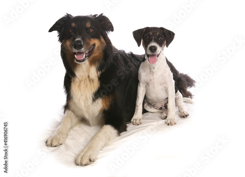 Canvas Print Two dogs in studio