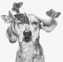 Monochrome Portrait Of A Dog With Butterflies Isolated On A White Background. Realistic Monochrome Pencil Drawing.