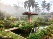 Garden With Green Plants And Lake. In The Center A Kiosk. In The Background, Tropical Vegetation In The Morning Fog.