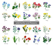 Wild Flowers And Herbs Set Isolated On White Background. Collection Of Botanical Flowers In Vintage Style. Elements For Summer, Spring Bouquet. Symbols Of Alternative Medicine. Vecrtor Illustration.