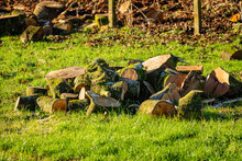 Pile Of Cut Logs And Wood Lying In A Field In The Low Winter Sun Light