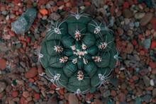 Cactus Pequeño Vista Superior