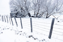 Barbed Wire Picket Fence In Winter And Abandoned Homestead