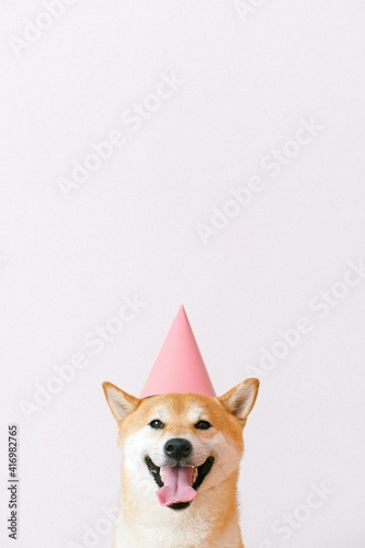 Fotografia dog