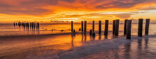Old Naples, Florida Pier Pilings In Gulf Of Mexico With Wooden Jetty, Many Birds, Pelicans And Cormorants Flying By Ocean On Beach. Travel And Beauy Of Nature Concept.