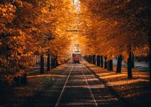 Tram In Autumn In The Park