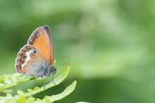 Bonita Mariposa De Colores Azul Y Naranja Con Puntos Sobre Una Planta Verde Con Fondo Verde Desenfocado