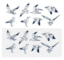 Set Of Seagulls Outlines. Hand Drawn Illustration Converted To Vector. Black On Transparent Background