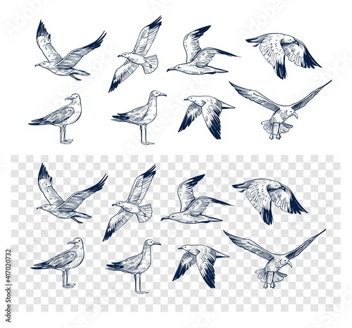 Fototapeta Set of seagulls outlines. Hand drawn illustration converted to vector. Black on transparent background obraz