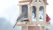 Female Northern Cardinal Eating Seeds On A Bird Feeder With Snow Falling On A Cold Winter Day