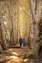Romantic Couple Walking Hand-in-hand With Backs Toward Camera In Sunlight Woods.