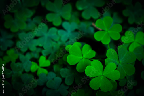 Small green Clover leaves pattern background, Natural and St Fototapeta
