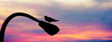 Silhouette Of A Seagull Bird Standing On A Street Lamp Against Moody Dramatic Sunset Sky