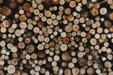 Stacks Of Freshly Cut Wood. Closeup Of Logs Of Trees In Nature Background Of Cutted Logs