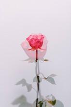Pink Rose Film Inspired Look Double Exposures
