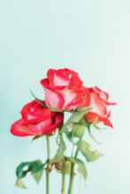 Red Roses Blue Backdrop Film Inspired Edit Trippy Flowers