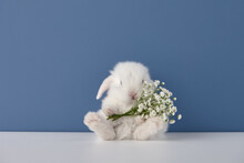 Baby Rabbit With White Flowers Bouquet On Blue Background. Spring Easter Concept.