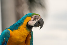 Close-up Of Beautiful Colored Macaw Posing In An Open Space, In The Middle Of Nature.