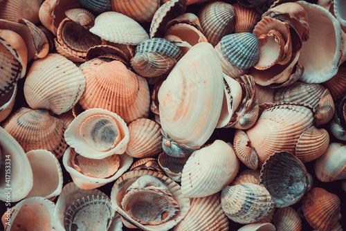 Billede på lærred variety of sea shells from beach