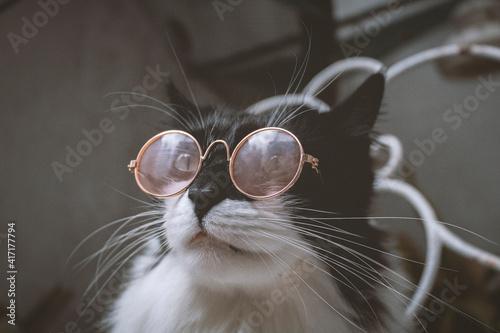 Fototapeta gato blanco y negro con gafas