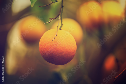 Fotografie, Tablou Orange garden with fruits