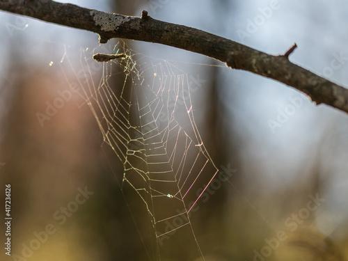 Canvas Print toile araignée