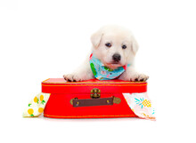 Cute Puppy With Travel Suitcase On Isolated White Background