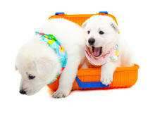 Two Puppies With Travel Suitcase On Isolated White Background