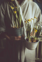Mid Section Of Woman Holding Pots With Flowering Daffodils