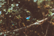 Blue Butterfly Among Leaves