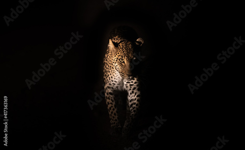 Tablou Canvas Leopard at night