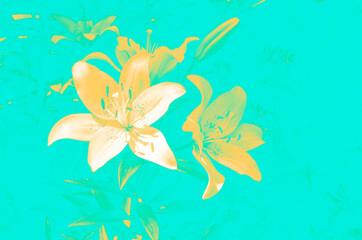 Fototapeta na wymiar Yellow lily flowers on light blue background illustration